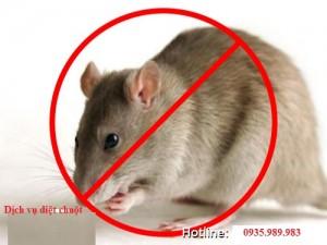 Dịch vụ diệt chuột tận gốc