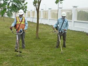 Dịch vụ cắt cỏ tại hà nam - duy trì cảnh quan tại hà nam