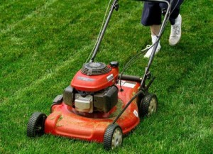 Dịch vụ cắt cỏ và duy trì cảnh quan tại tỉnh hòa bình